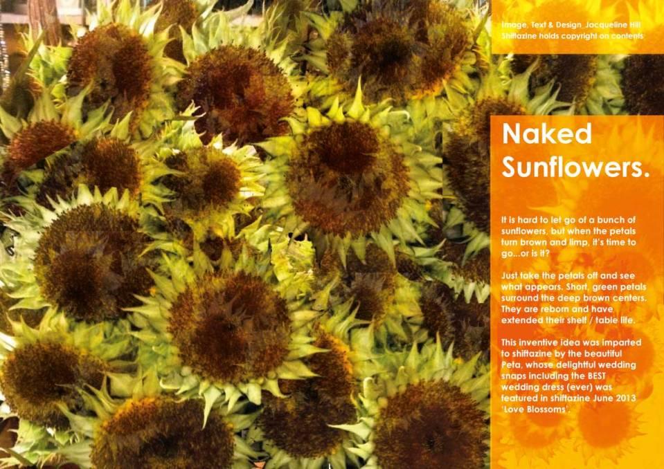 Sunflower.lo